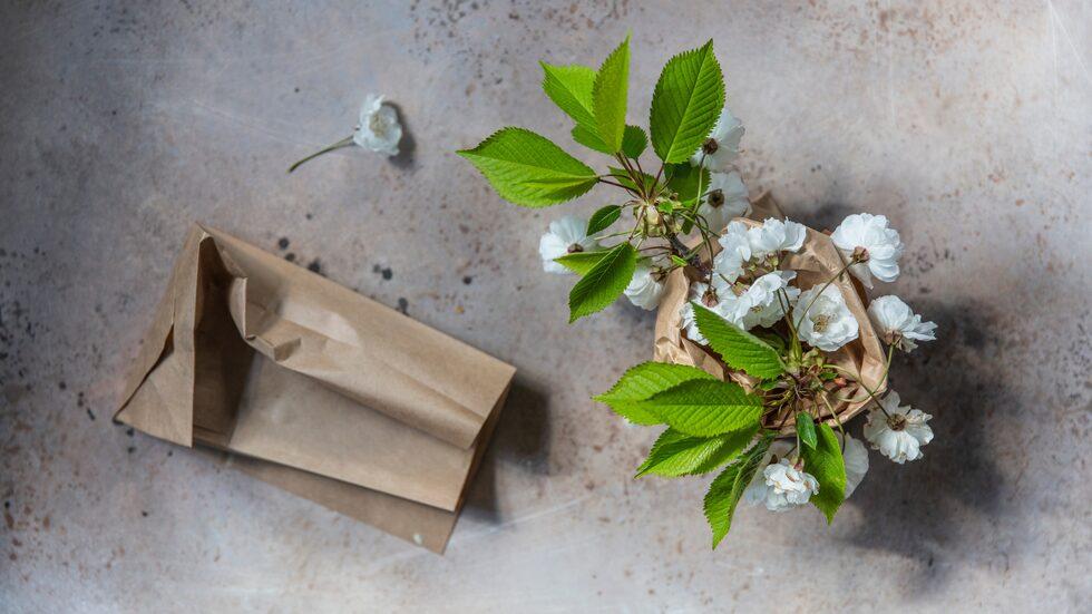 Sätt en kvist med prydnadskörsbär i ett glas och ställ den i en papperspåse. Det blir en fin gåva eller en vacker dekoration hemma.