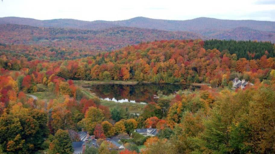 Twin Farms i Vermont omges av 120 hektar djupa skogar och vilda ängar. Himmelriket för en hund?