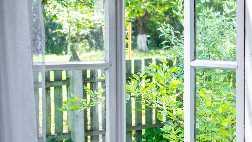 Finns det något härligare än att öppna fönstret under sommaren? Mindre härligt är det när allt fler småkryp letar sig in.
