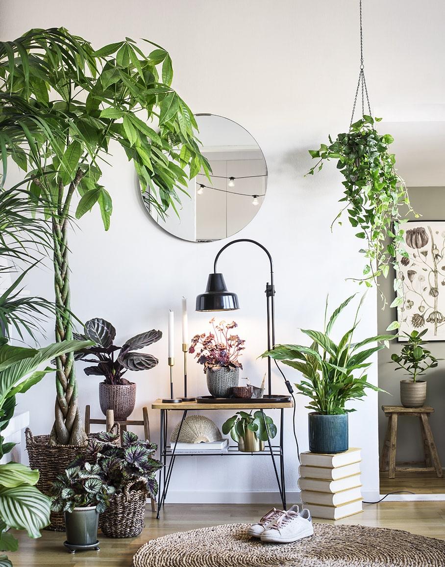 Bygg på höjden och involvera dina gröna växter i inredningen hemma.
