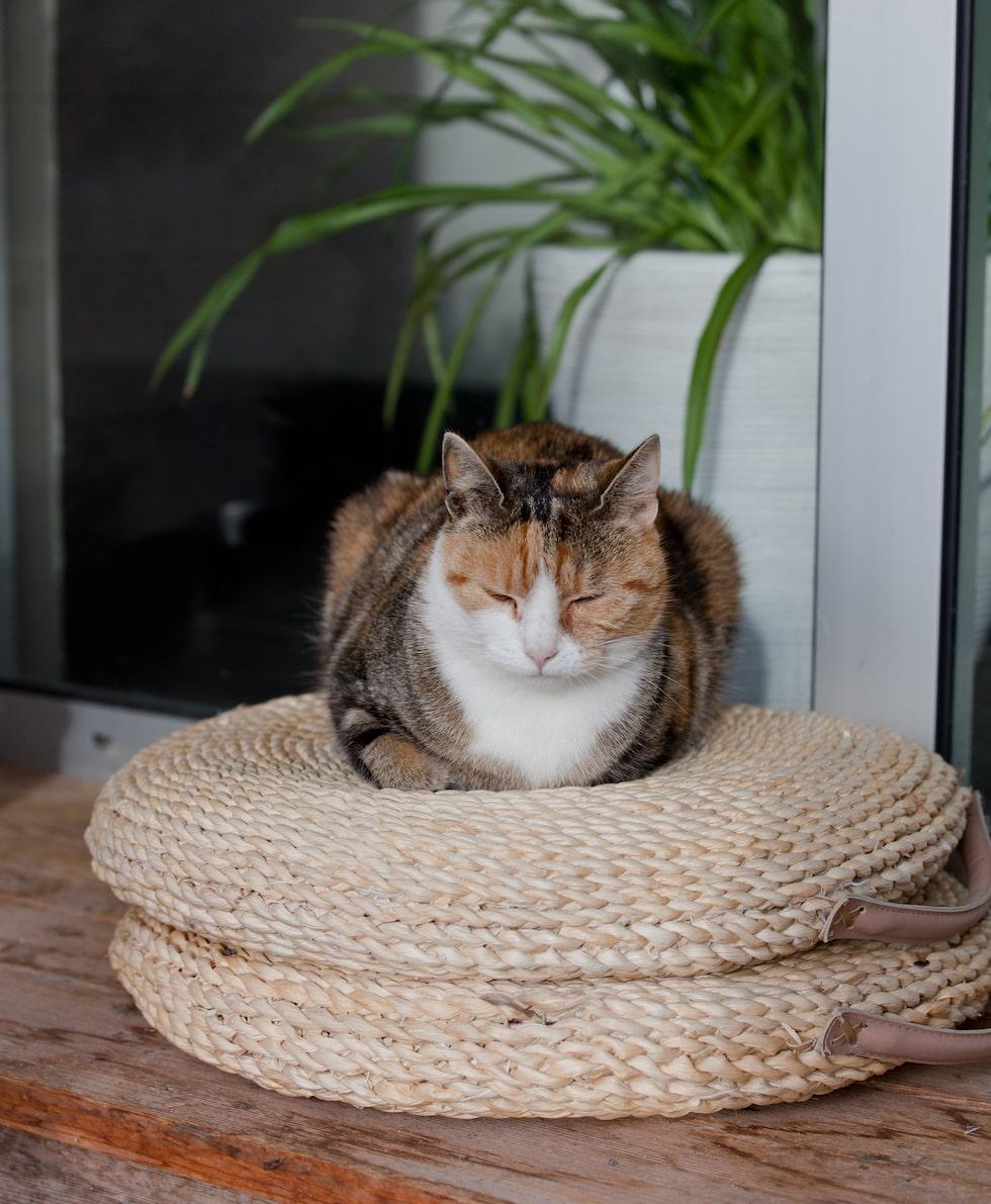 Katten Lisen sover gott på sittpuffarna. Puffar, Ikea.
