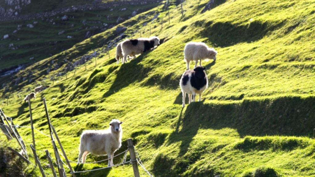 <p>Färöarna är stickad kofta, betande får, och så grönt gräs att det ser ut att ha ett Instagramfilter på sig.<br></p>