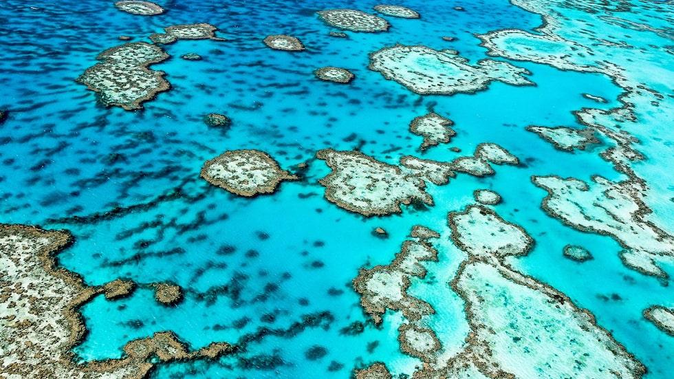 Världens största korallrev utanför Australiens nordöstra kust är ett av flera hotade områden.