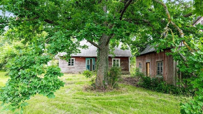 Tomten är på 3 454 kvadratmeter är full av grönskande träd och buskar.