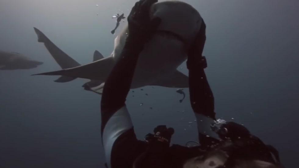 <p>När Blondie simmar fram till dykaren vet han precis vad hon är ute efter.</p>