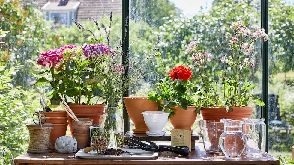 Dina krukväxter vill gärna ha god dränering för att må bra...