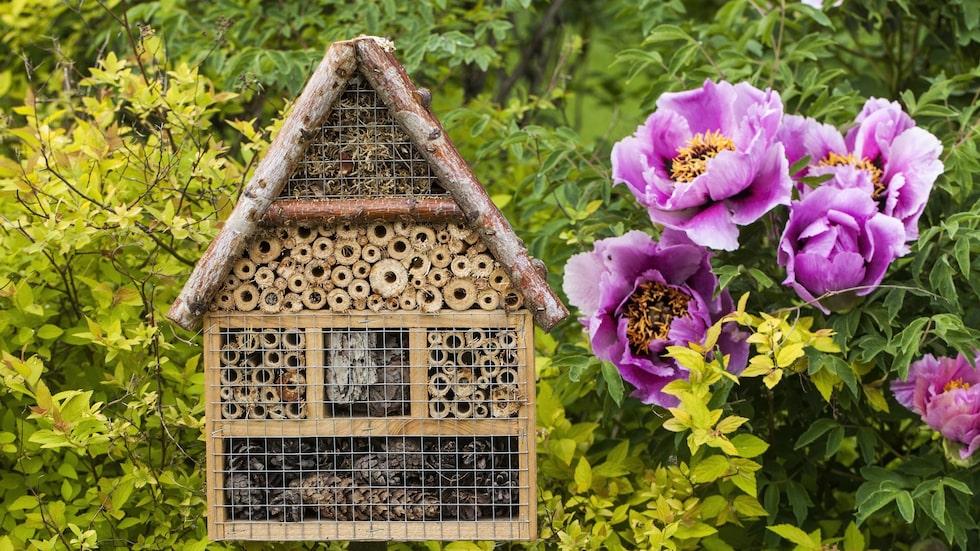 Vilda bin trivs i håligheter. För att skydda dem mot fåglar kan man sätta hönsnät över sitt bihotell.