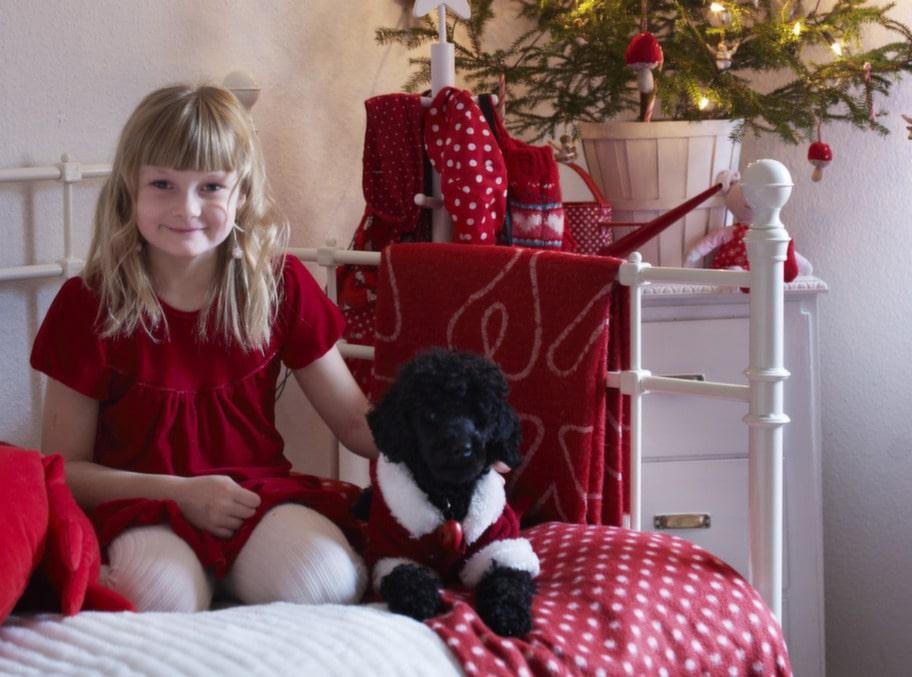 JULFINA. Hanna älskar prickigt. Pudeln Gucci har julkostymen på sig.