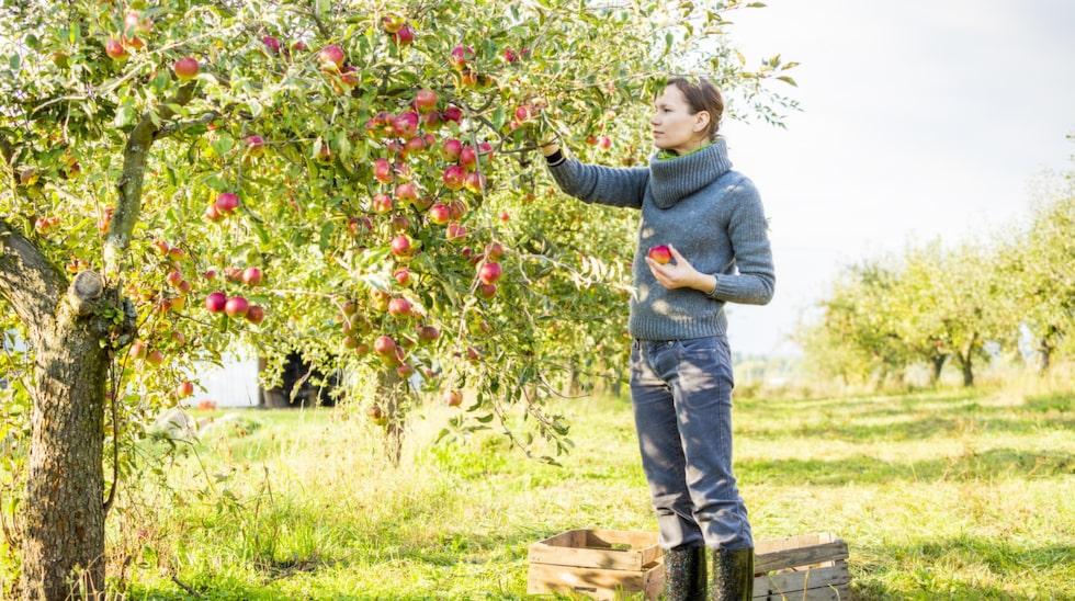"""Glöm inte att njuta av din trädgård. """"Sup in trädgårdens prakt, ta hand om bär och frukt, skörda grönsaker och känn dig rik."""""""