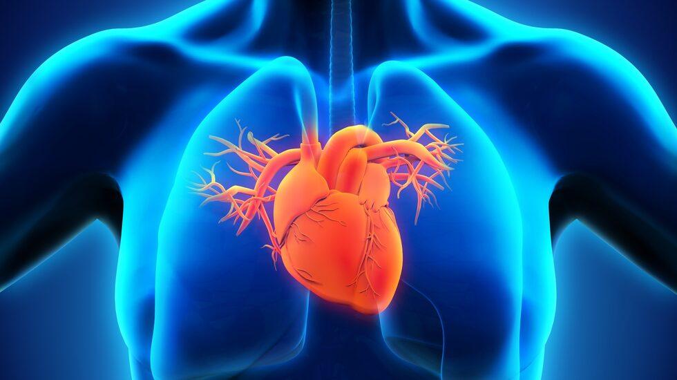 Forskarna har sedan länge sett ett samband mellan ett friskt hjärta och motion, men nu har den teorin stärkts ytterligare.