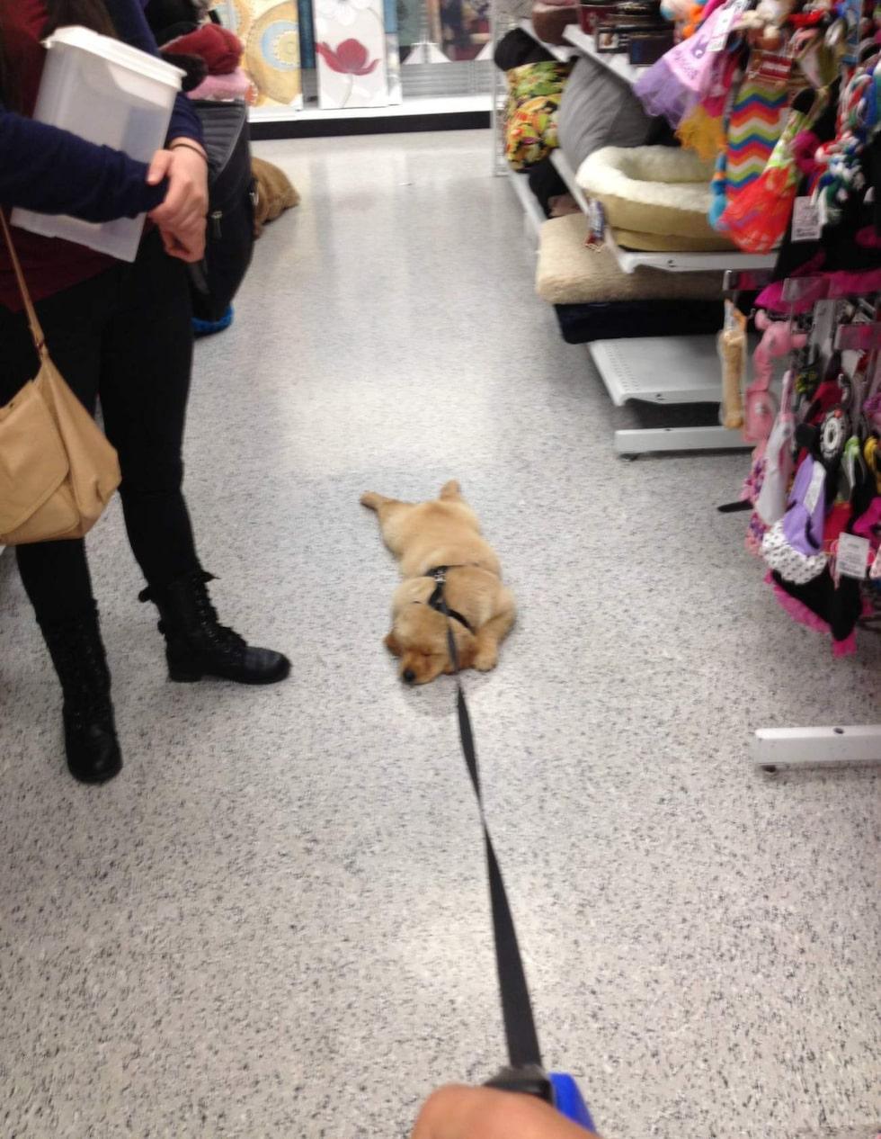 Vi har ju sett barn lägga sig och protestera så här i affären. Men hundar...?