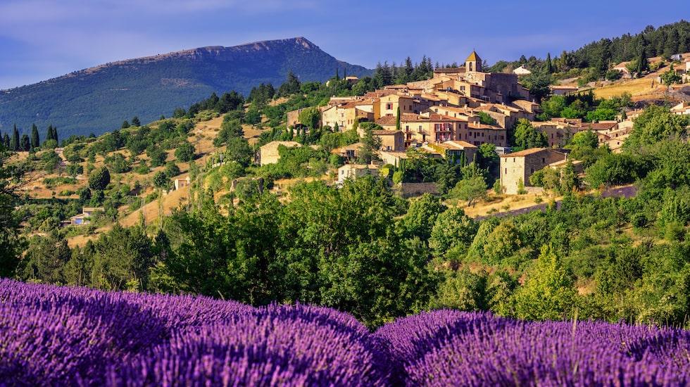 Lavendel, själva sinnebilden för Provence.