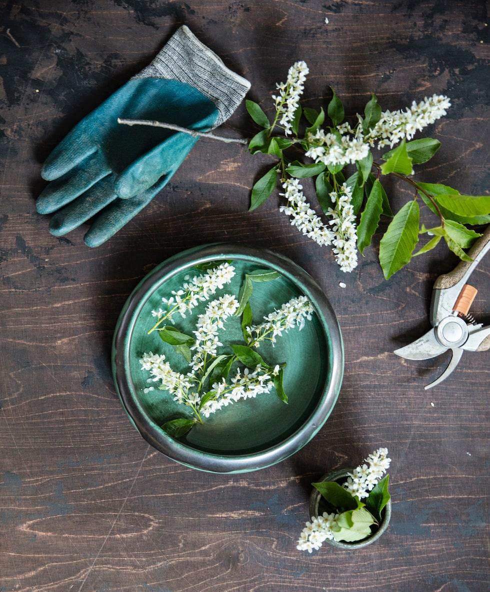 Blommande hägg doftar ljuvligt. Klipp klasar och lägg dem i lite vatten så klarar de sig i några dagar. För att få kvistar att blomma inomhus tidigare klipper du dem med en ren sekatör i sneda snitt. Ställ kvistarna i ljummet vatten och se till att det inte är för torrt eller varmt i rummet, i så fall behöver du sprejduscha kvistarna ofta.