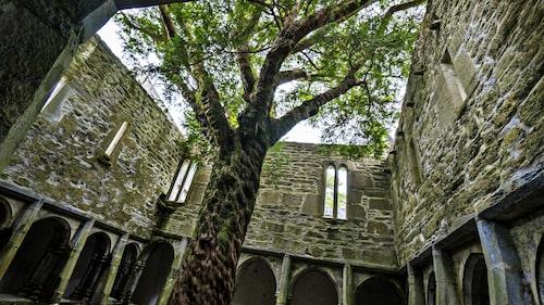 Kyrkoruinen Muckross Abbey från år 1448.