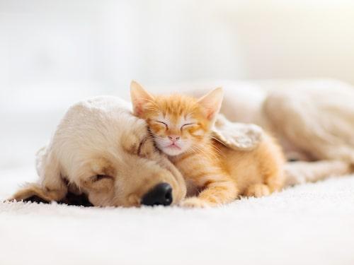 Älskade husdjur. Glöm inte att för både hundar och katter är just sommaren förenat med flera faror, också livsfarliga sådana.
