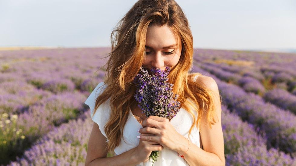 Lavendeln har under århundraden använts i både läkande och avkopplande kurer. I det forna Egypten användes blomman inom hudvård, i framför allt massageoljor, och romarna använde blomman för att behandla sår och huvudvärk, men också i tvätten och som parfym.