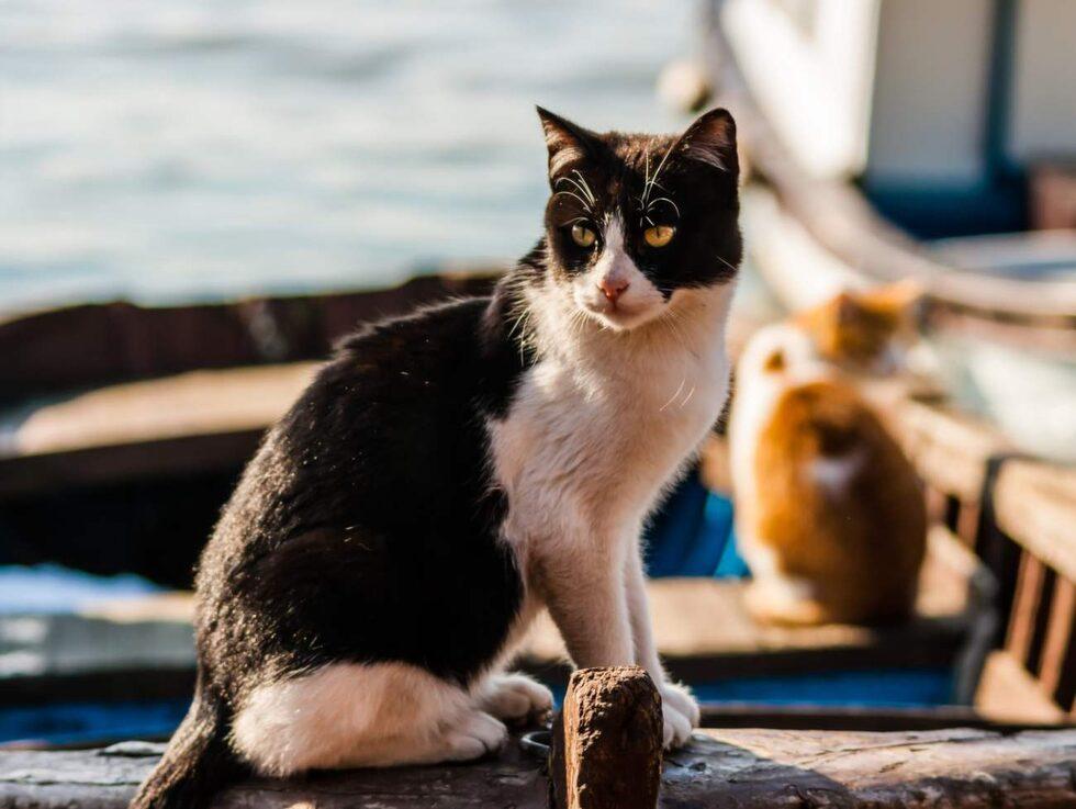 Kryssningen Meow Meow Cruise vänder sig till sanna kattvänner - som dock ombeds lämna sina älskade husdjur hemma.