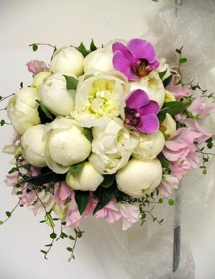 HÄRLIGA KONTRASTER. Underbara vita pioner omringade av luktärt med inslag av några lila orkiéer.