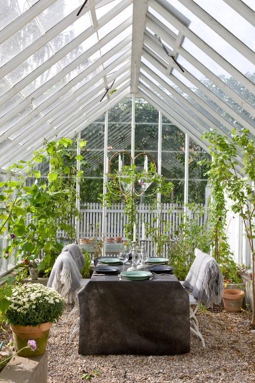 Växthuskänsla från Sweden Greenhouse.