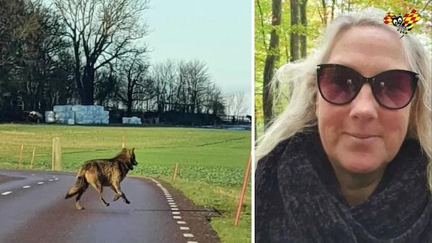 Camilla såg en varg utanför Eslöv