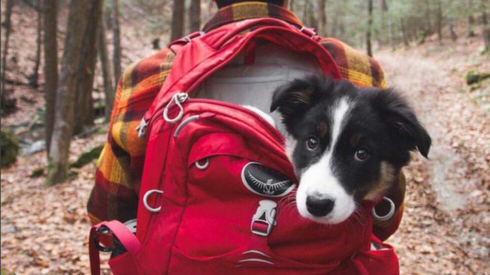 <p>Här visas mängder av olika campinghundar i vildmarken upp.</p>