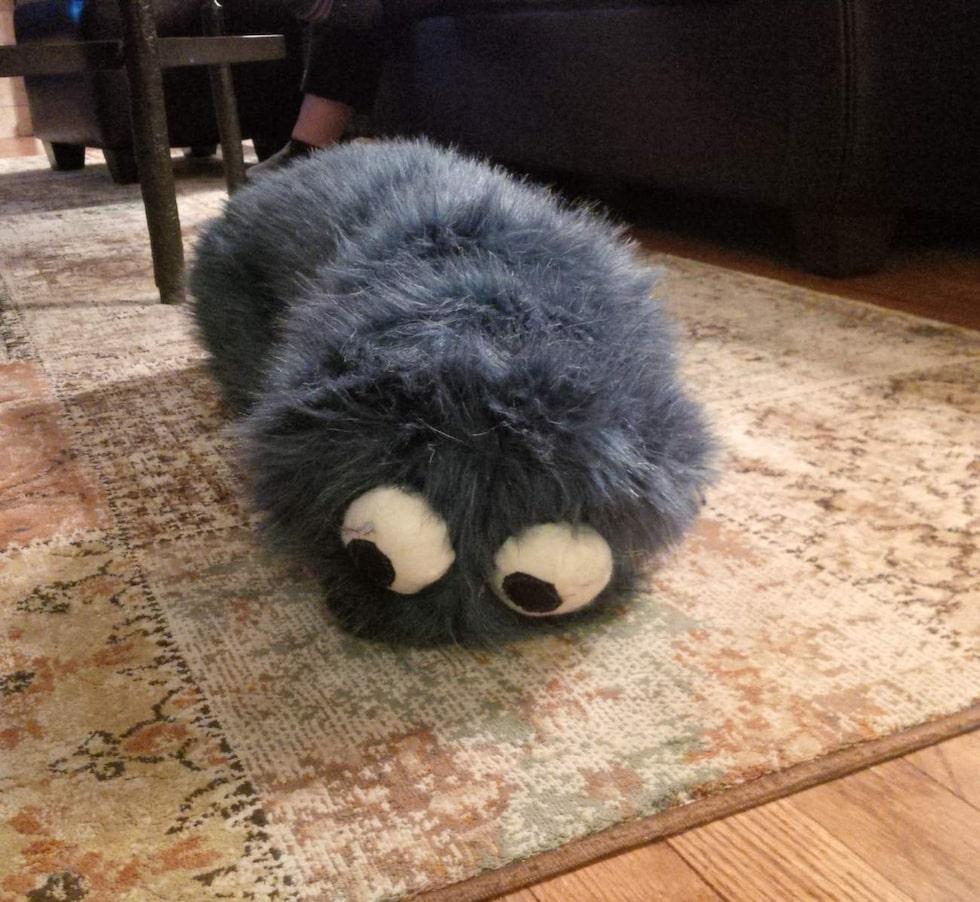 Alltså, jo, det är faktiskt en hund här under. En hund som gömt sig under någon form av... filt?