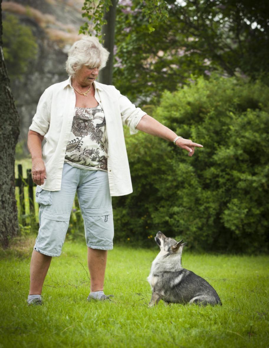 """TRICK: SNURRA RUNTSteg 3: Träna på att """"snurra"""". Lär   hunden """"snurra"""" från olika startpositioner. Från sittande eller  när   den går bredvid dig. Snurra flera gånger och byt håll under  övningen."""