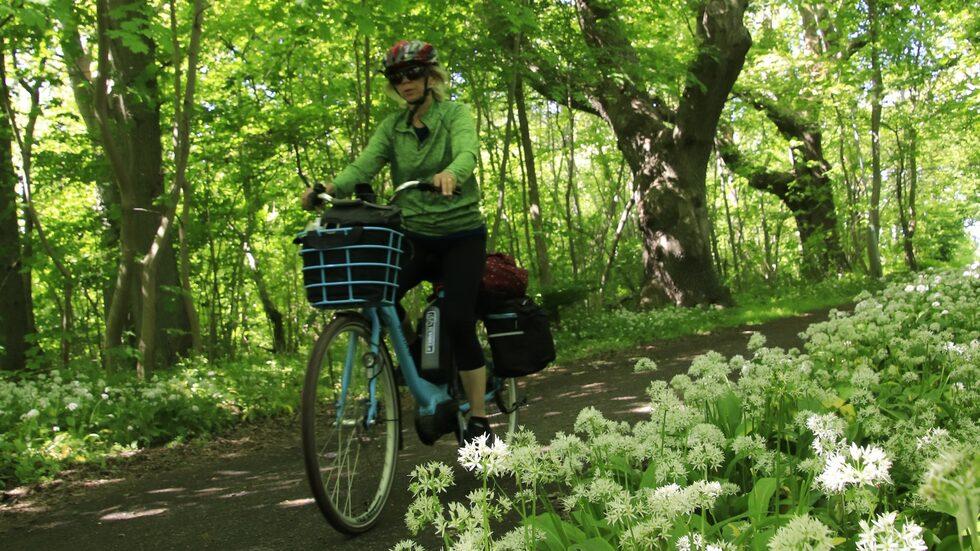 Cykling genom Ramslöksriket söder om Kivik, nära Stenshuvud.