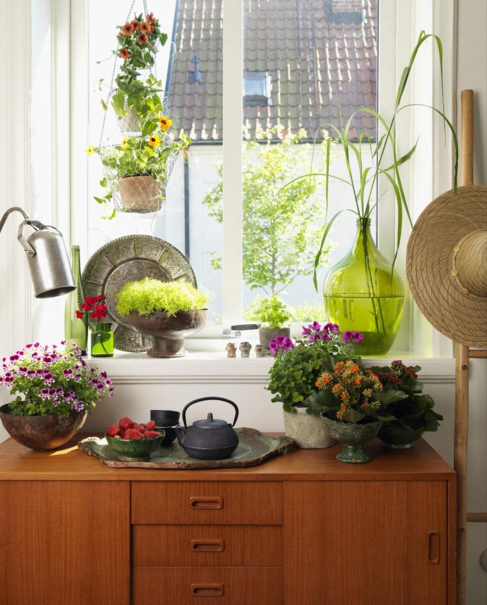 Frodigt. Välkommen till tropikerna! En trend där vi pyntar med amplar och lummig grönska.