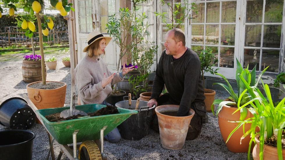 """I årets säsong skapas bland annat en stor köksträdgård, en """"episk"""" spegelrabatt, en nymodernistisk trädgård, en bohemisk radhusträdgård, en timberlodge och en mysig trädgårdslund."""