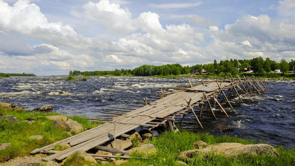 Torneälven är en av Sveriges få outbyggda älvar där inget kraftverk är i vägen fisken.