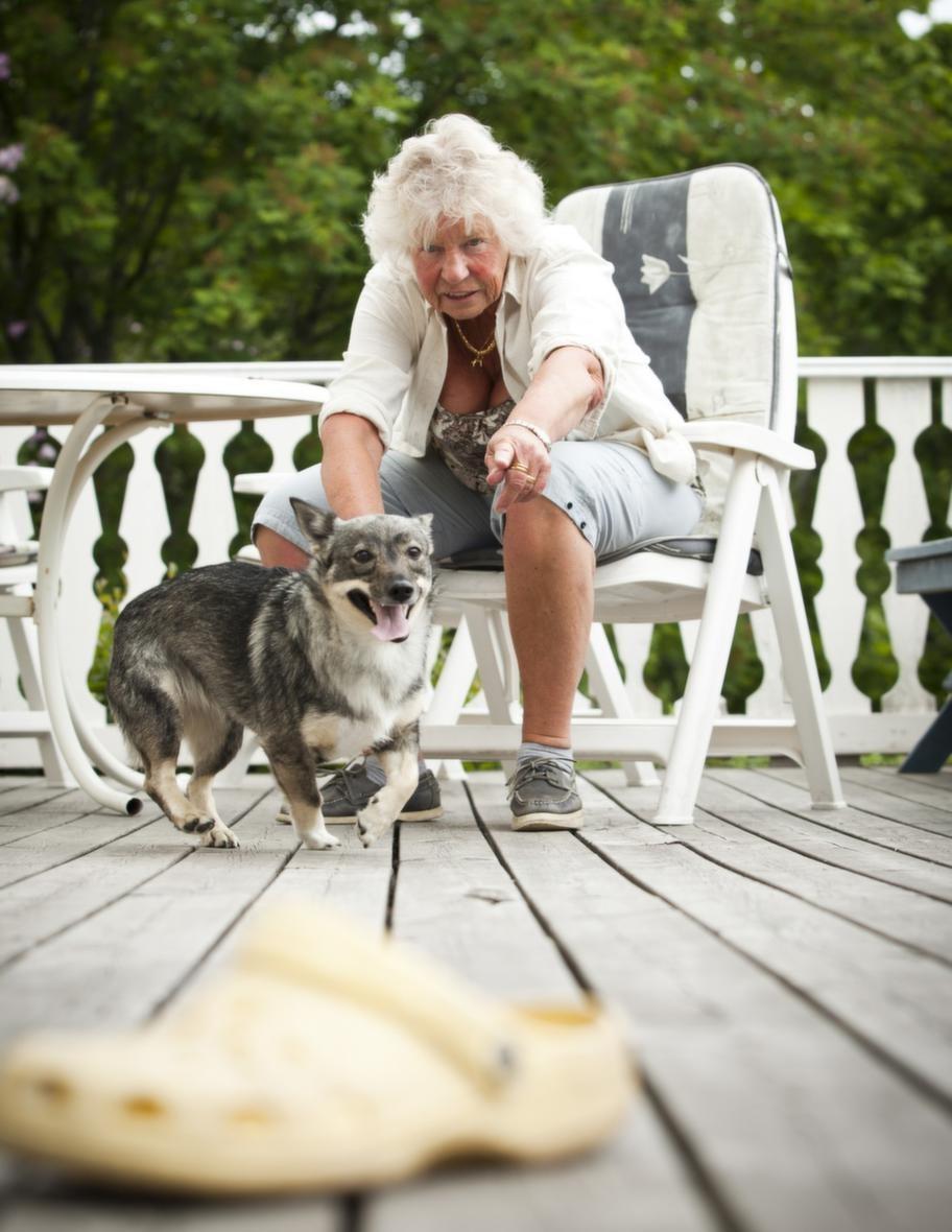 TRICK: HÄMTA EN SKOSteg 2: Byt föremål. Uppmuntra hunden att hoppa  upp med framtassarna mot dig med föremålet i munnen. Du kan också lära  hunden att sätta sig framför eller bredvid dig och byta föremål mot  godis där i stället.