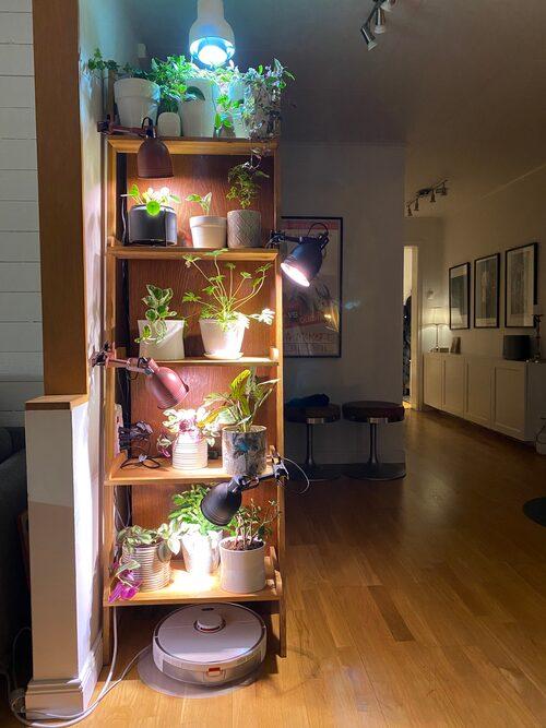 Krukdjungel. Per Anderssons fru Malin har börjat samla på blommor, som fyller hyllor och fönsterbrädor.