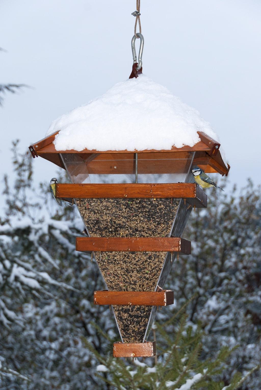 Varianterna på fågelmatare numera är oändliga. Läs experternas tips för att välja rätt.