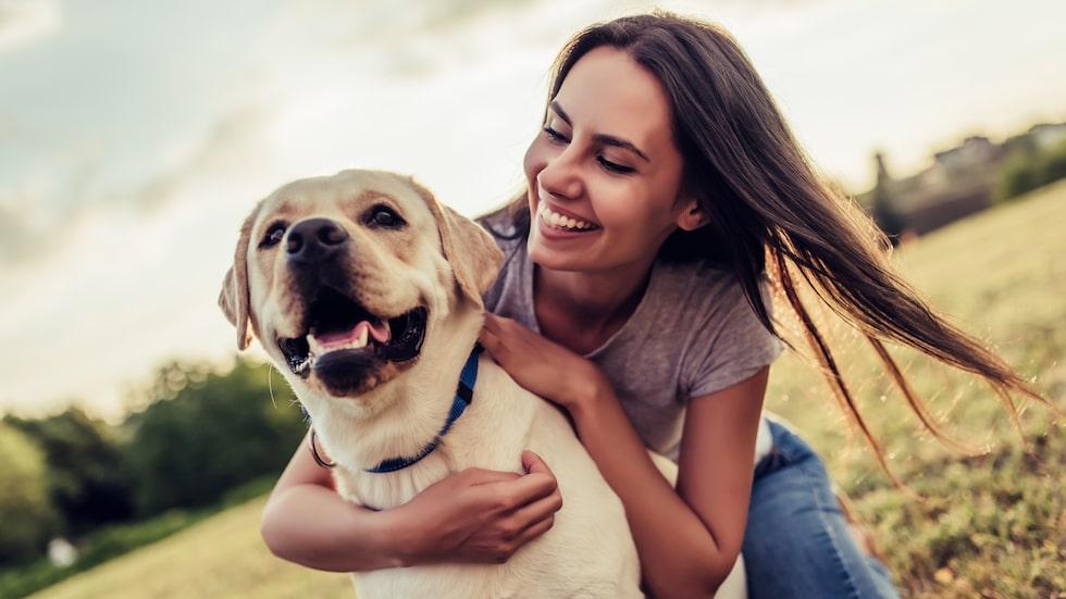 Att få en bakdel mot sig när man hälsar är höjden av artighet – från hundens sida.