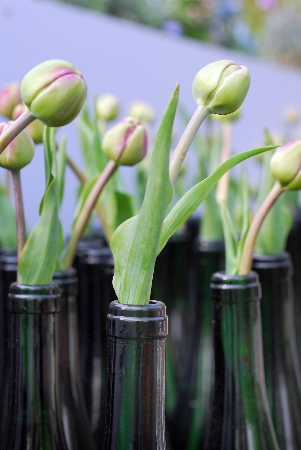 Varför inte placera tulpanerna en och en i olika smala vaser och ställa i grupp? Här har man använt sig av gamla vinflaskor, jätteläckert!