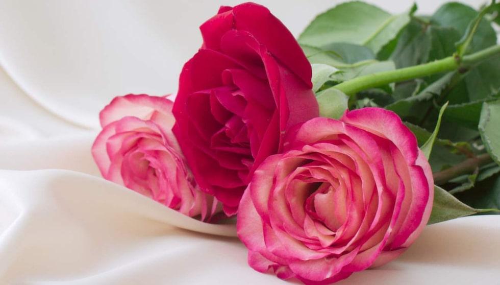 Rosor är en omtyckt blomma och populär att ge bort till någon man tycker om.