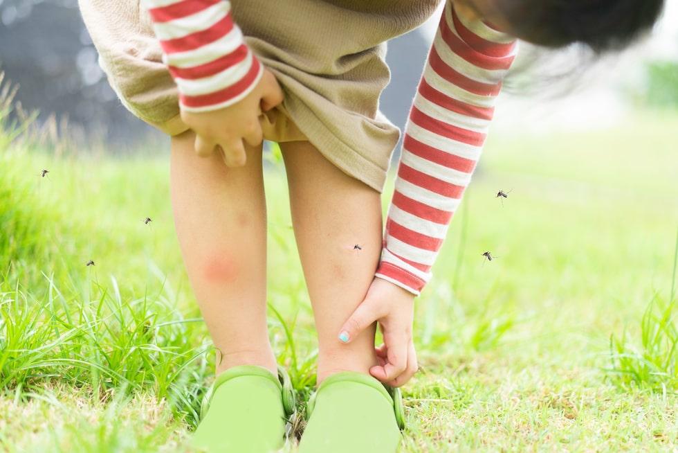 Mygg går i gång på svettiga ben.