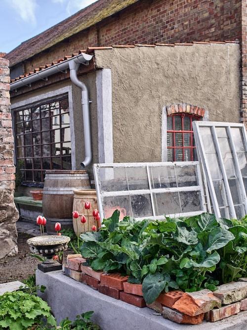 I varmbädden i köksträdgården växer det så att det knakar.