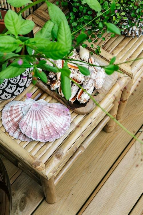 Pernilla älskar snäckor och på de två låga bambuborden intill duschen har hon samlat några. De flesta snäckorna är köpta på loppis, men några kommer från Pernillas butik.