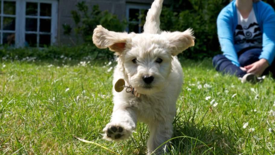 <strong>4. Hundar leker</strong><p>De älskar att leka och röra på sig. Att leka  öppnar sinnena, ökar kreativiteten och att röra på sig gör att vi mår  bra. En hund kan hoppa av glädje varje gång han får leka med en boll,  även om det sker varje dag. Tänk att vi som hundarna, skulle bli lika  glada, hoppa av glädje för att solen skiner.</p>