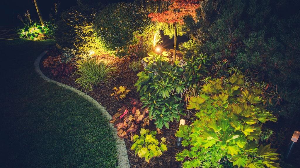 Att belysa trädgården kan få den att leva. Rikta lamporna rätt och du framhäver det du är stolt över och döljer det andra. Med flyttbara spotlights kan man belysa de växter som är vackrast i respektive säsong.