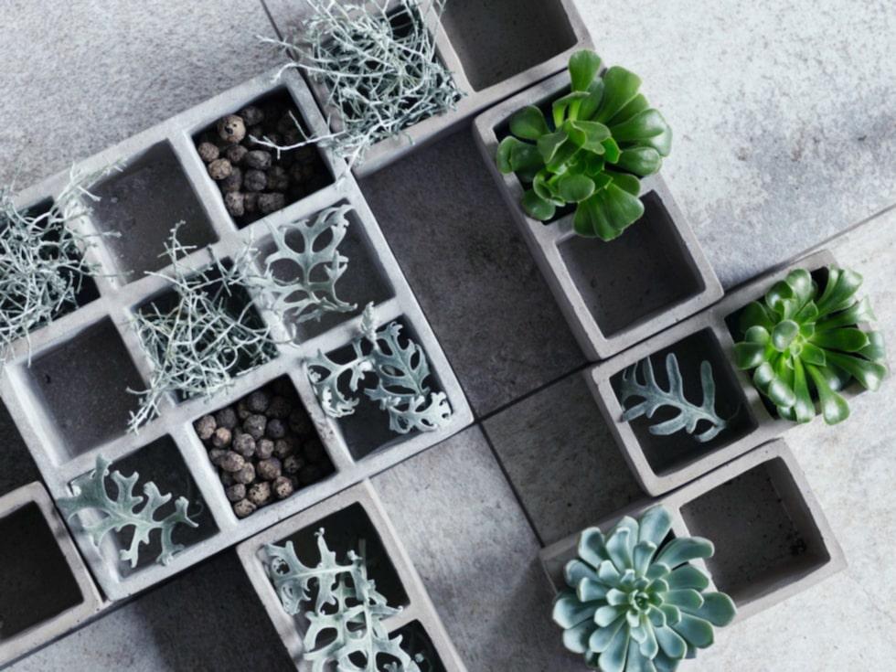 Gröna växter blir ett allt vanligare inslag i hemmet, det är ju inte svårt att förstå varför!