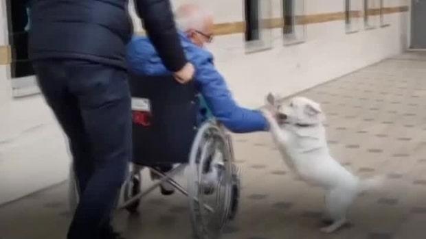 Lyckan när hunden återförenas med sin ägare