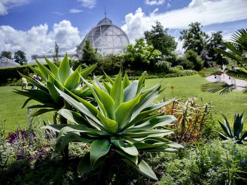 Ta en picknick i det gröna i vackra Trädgårdsföreningen.