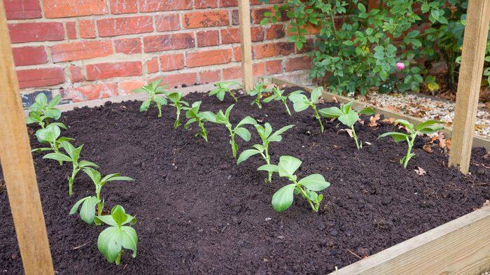 Plantera sedan ner plantorna tillsammans med rullen – den förmultnar i jorden.