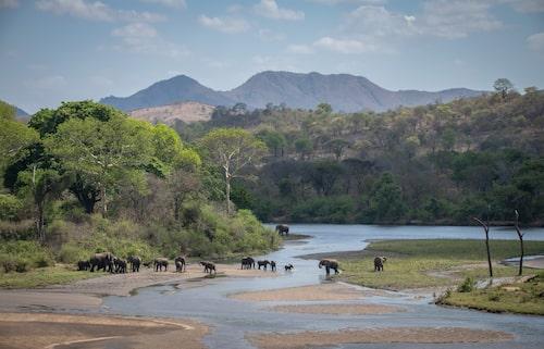 Majete är ett av de främsta exemplen på lyckad rehabilitering av ett sargat naturområde. Idag är Majete bland annat hem åt en välmående elefantpopulation.