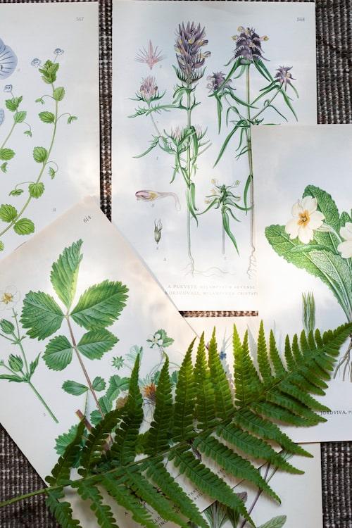 Små växtbilder, 20 kr st, À la carte antik. Matta, Vintage Royal, 17 800 kr, Dis Inredning.