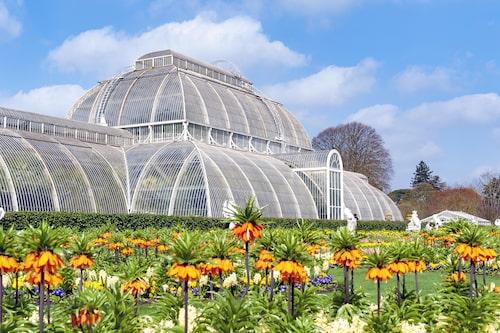Kew Gardens är upptagen på Unescos världsarvslista.