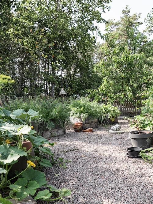 """Trädgården betyder mycket för Monica som gärna tar sig an nya utmanade projekt, både när det kommer till att odla och att skapa. """"Jag spenderar nästan all min lediga tid i trädgården och nya idéer kommer hela tiden. Jag får arbeta med både kropp och knopp och mår som allra bäst då."""""""